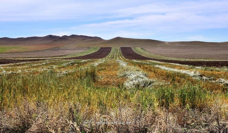 kkj-몽골