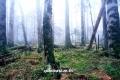 백두산 지하삼림-이만욱
