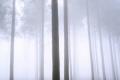 장성 축령산 편백나무숲