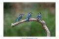 물총새-강원횡성-3