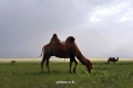 mongol-2013-14-jpg