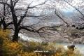 im산동 산수유-Photographs by lee, manuk-Canon650D-Elmarit16mmg_2513
